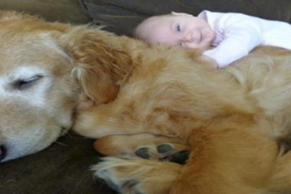 Απίστευτο: Αν έχεις σκύλο θα ζήσεις περισσότερο!