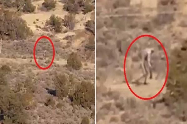 Άφωνοι οι επιστήμονες με αυτό το τρομακτικό πλάσμα που βρέθηκε στην έρημο. Δείτε το βίντεο που σόκαρε τον πλανήτη!