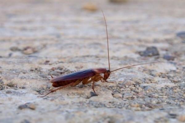 Αν «συναντήσετε» αυτή την κατσαρίδα στο σπίτι κάντε το σταυρό σας! (photos)
