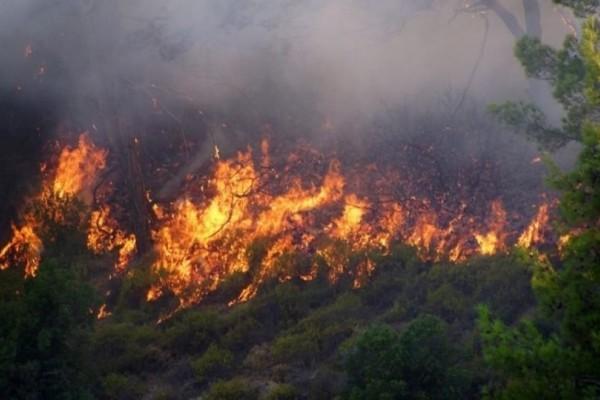 Πυρκαγιά καίει δασική έκταση στην Κρήτη!