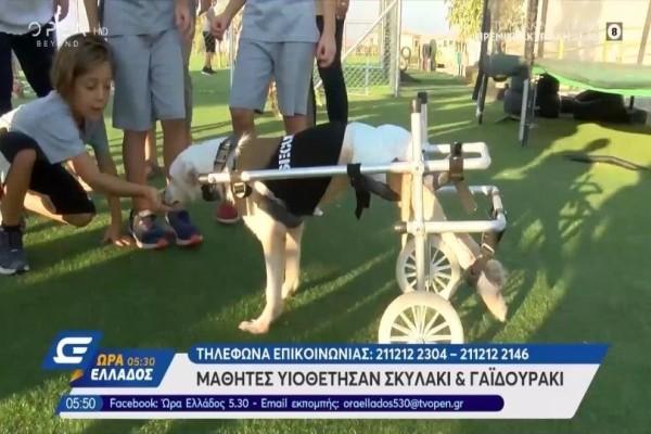 Μαθητές υιοθέτησαν ανάπηρο σκυλάκι και γαϊδουράκι στην Βάρκιζα! (Video)