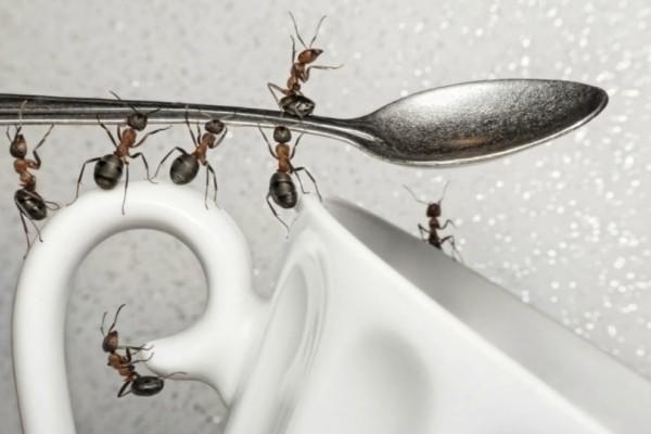 Κρατήστε μακριά τα μυρμήγκια από το σπίτι σας με αυτό το κόλπο! Δείτε εδώ!