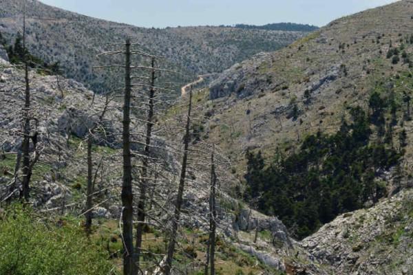 Απίστευτο: Δείτε από κοντά το σεισμικό ρήγμα της Πάρνηθας!