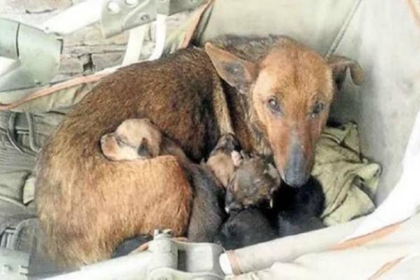 Συγκλονιστικό! Αδέσποτη σκυλίτσα θήλαζε ανθρώπινο νεογέννητο μωρό που πέταξε στα σκουπίδια η μητέρα του