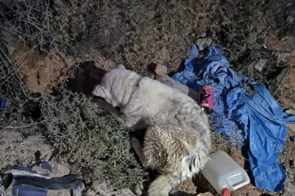 Πέταξαν γέρικο σκύλο σε γκρεμό στη Σαλαμίνα. Ψάχνει σπίτι!