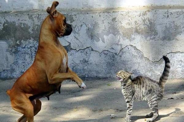 Φρίκη: Άνδρας τάιζε ζωντανές γάτες τους σκύλους του!