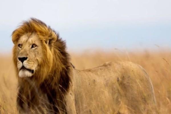 Ο κυνηγός, το λιοντάρι και το γλίστρημα… το ανέκδοτο της ημέρας (04/11) !