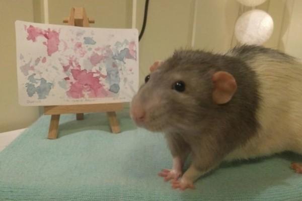 Ο αρουραίος- καλλιτέχνης που έχει ταλέντο στην ζωγραφική! Δείτε τους πίνακες του!