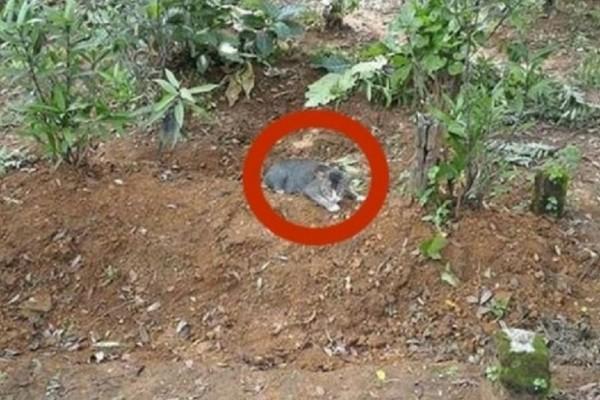 Άφησε φαγητό και νερό έξω από έναν τάφο. Την επόμενη μέρα πάγωσε με αυτό που αντίκρισε…