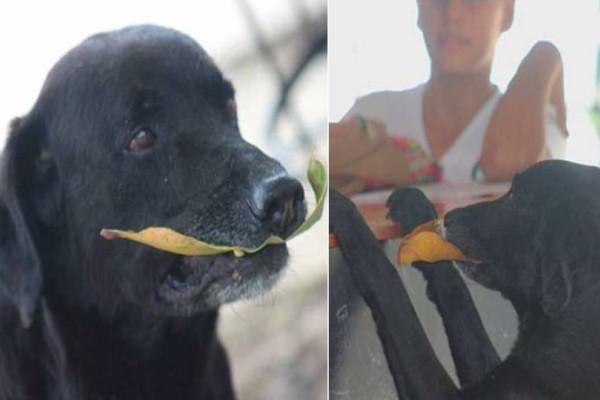 Ό,τι πιο όμορφο είδατε σήμερα: Σκυλάκι αγοράζει κουλουράκια και πληρώνει με φύλλα δέντρου!