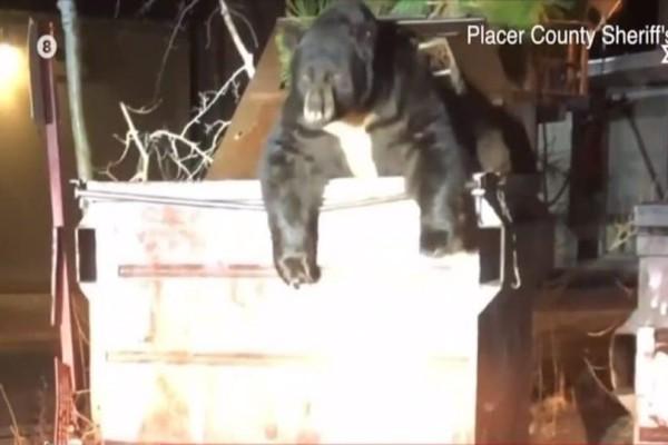 Θα συγκινηθείτε: Αρκούδα εγκλωβίστηκε σε κάδο! Γενναίοι αστυνομικοί την έσωσαν! (Video)