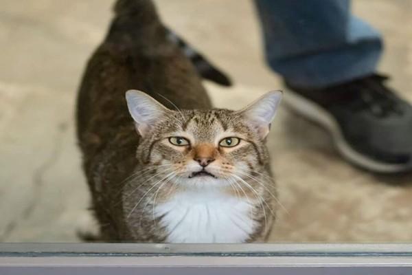 Αυτή είναι η πιο επικίνδυνη γάτα στον κόσμο! (Video)