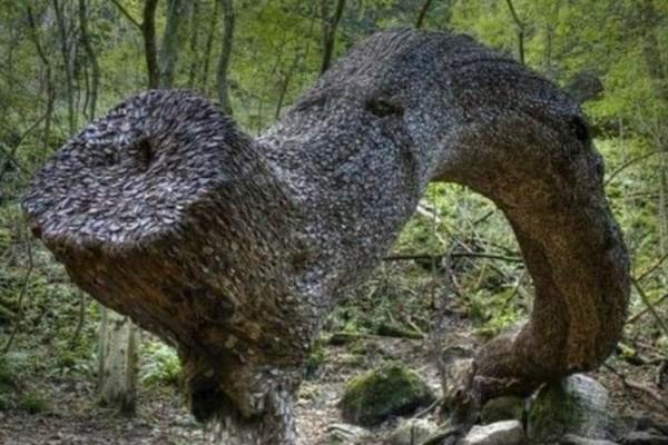 Το θαυματουργό δέντρο που γεννάει κέρματα!