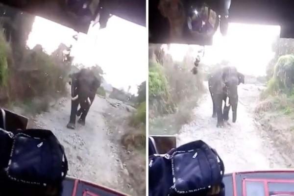 Εξαγριωμένος ελέφαντας κλείνει το δρόμο σε οδηγό λεωφορείου!  Δεν φαντάζεστε τι γίνεται μετά...! (Video)