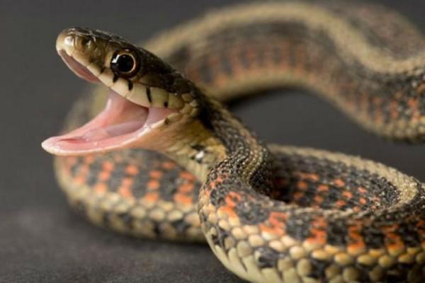 Τη δάγκωσε δηλητηριώδες φίδι πριν 50 χρόνια σήμερα είναι...