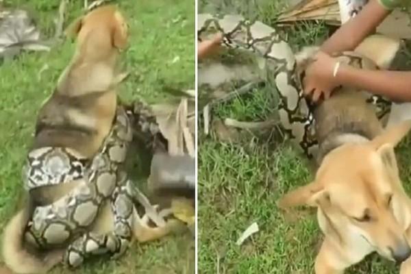 Σοκ: Μικρά παιδιά έσωσαν το σκυλάκι τους από φίδι που το είχε τυλίξει και παρολίγον να το σκοτώσει!