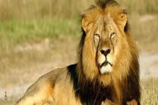 Λιοντάρι φτερνίζεται και... (Video)