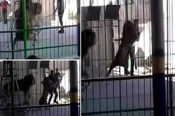 Λιοντάρι αντικρίζει έναν άνδρα μέσα στο κλουβί! Δευτερόλεπτα μετά οι εικόνες... σοκάρουν!