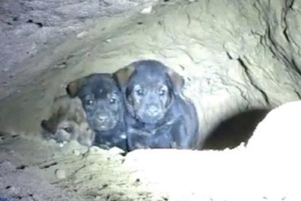 Προσπαθούσαν να σώσουν 8 εγκλωβισμένα κουταβάκια, αλλά μόλις κοίταξαν μέσα στην τρύπα έπαθαν σοκ! (Video)