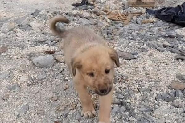 Το σκυλάκι που σώθηκε από θαύμα από τους βομβαρδισμούς στην Συρία! (Video)