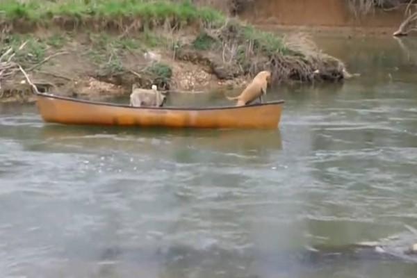 Δύο σκυλάκια χάνονται μέσα στο ποτάμι! Τότε εμφανίζεται ένα τρίτο και κάνει το... απίστευτο!