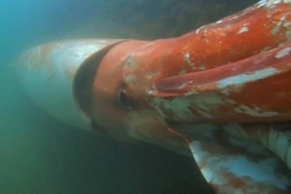 Δεν έχετε ξαναδεί κάτι παρόμοιο.. Ένα γιγάντιο καλαμάρι παρακολουθεί ένα υποβρύχιο! (Photos)