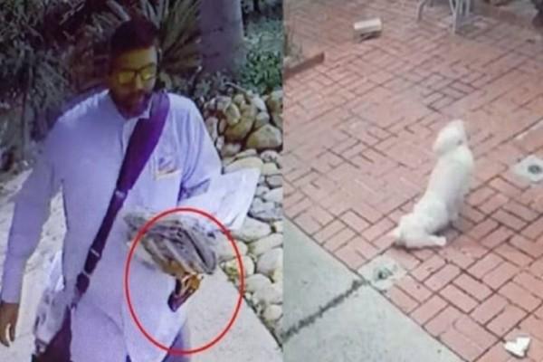 Αυτός ο τύπος πλησιάζει απειλητικά το σκυλάκι: Λίγο μετά εκείνο σπαράζει από τον πόνο!