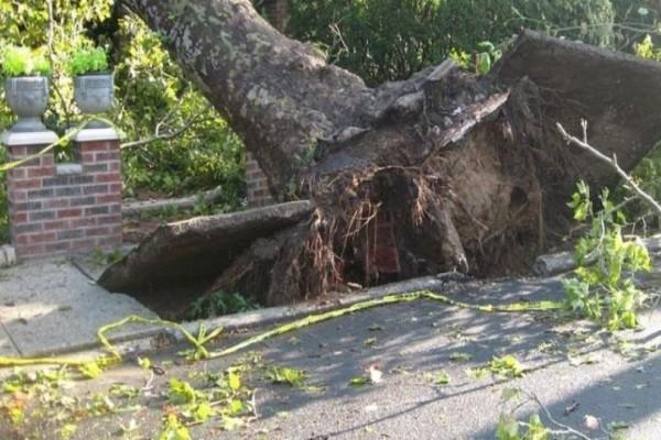 Σοκ στην Θεσσαλονίκη: Γυναίκα τραυματίστηκε από πτώση δέντρου!