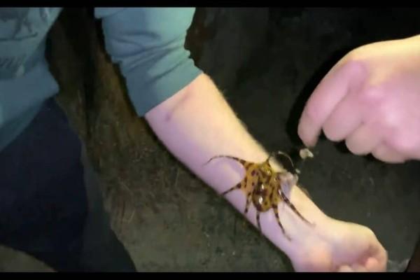 Βρέθηκε το χταπόδι δολοφόνος! Μην το αγγίξετε αν το δείτε θα σας σκοτώσει! (Video)