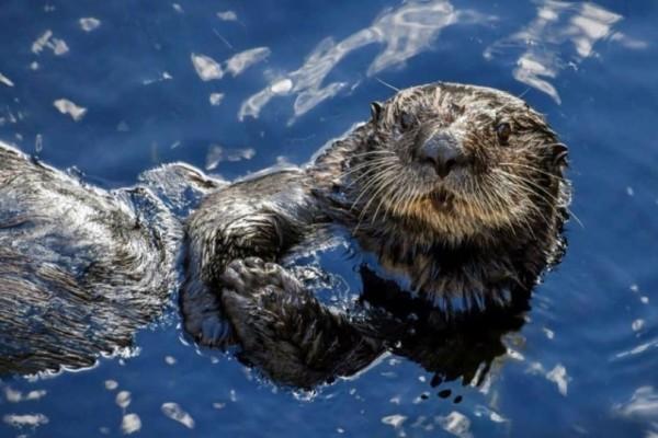 Αυτό είναι το πιο αρρωστημένο ζώο στη φύση: Αποκεφαλίζει και βιάζει!