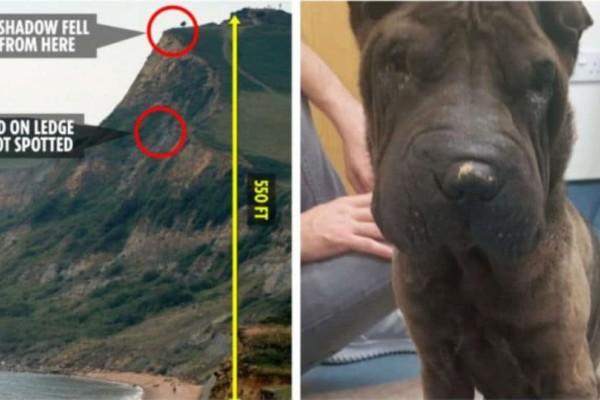 Ο σκύλος της φωτογραφίας έπεσε από γκρεμό. Η συνέχεια θα σας συγκλονίσει!