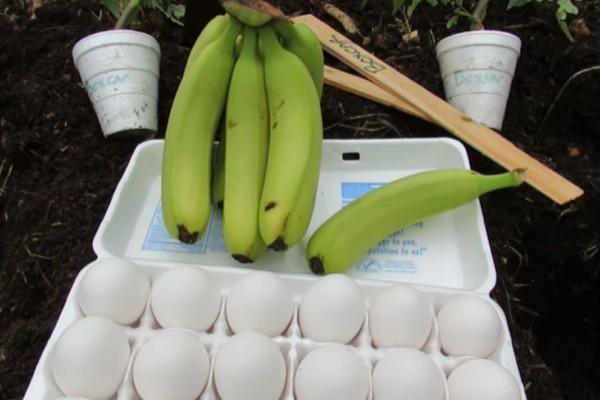 Έθαψε μια μπανάνα μαζί με ένα αυγό! Το αποτέλεσμα θα σας αφήσει άφωνους!