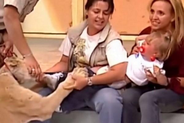 Πήγε στο στούντιο της εκπομπής ένα άγριο λιοντάρι, άρπαξε το κορίτσι και στη συνέχεια πάγωσαν όλοι!