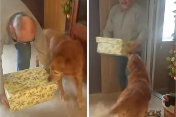 Πήραν σε αυτό τον σκύλο ένα δώρο..μόλις δείτε τι είχε μέσα δεν θα πιστεύετε στα μάτια σας! (Video)