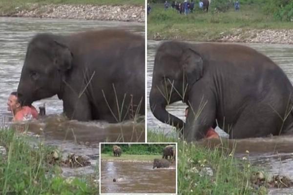 Ελέφαντας βλέπει να πνίγεται ο άντρας που πριν 5 χρόνια του έσωσε τη ζωή. Η αντίδρασή του; Θα σας συγκλονίσει!