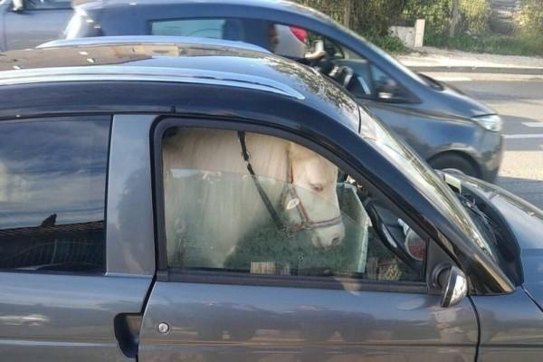 Αδιανόητο: Γυναίκα είχε για συνοδηγό της ένα... άλογο!