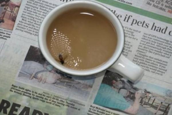 Η ανεκδοτάρα της ημέρας: Πως αντιδρούν οι λαοί όταν πέφτει μια μύγα στον καφέ!