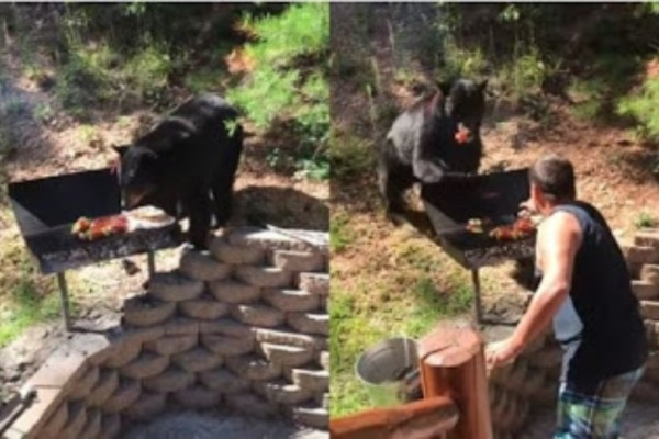 Αυτή η αρκούδα