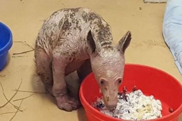 Βρήκαν αυτή την αρκούδα άρρωστη και πεταμένη σε κάδο χωρίς γούνα! Σήμερα όμως...