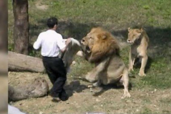 Ήπιε ναρκωτικά και έπεσε στο κλουβί με τα λιοντάρια. Όταν μάθετε τι έγινε μετά θα μείνετε άφωνοι!