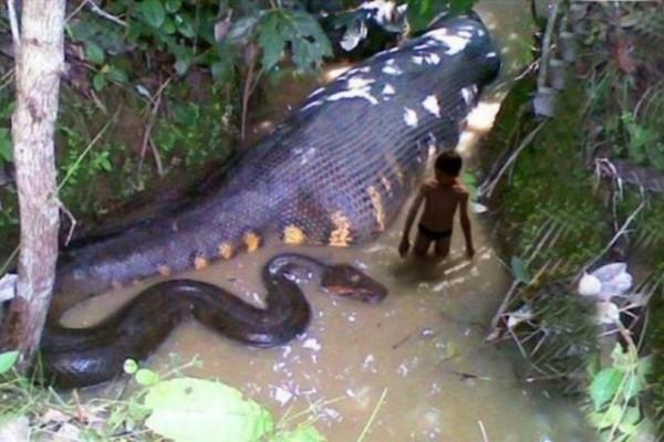 Το βίντεο με το μεγαλύτερο φίδι που το έχουν δει 4.885.304 χρήστες! Σοκάρει...