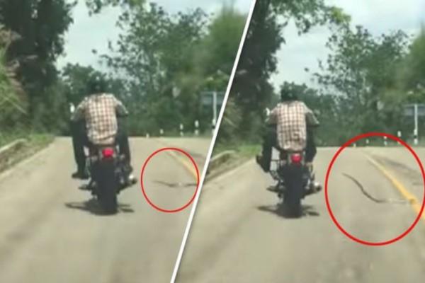 Φίδι επιτέθηκε σε οδηγό μηχανής! (Video)