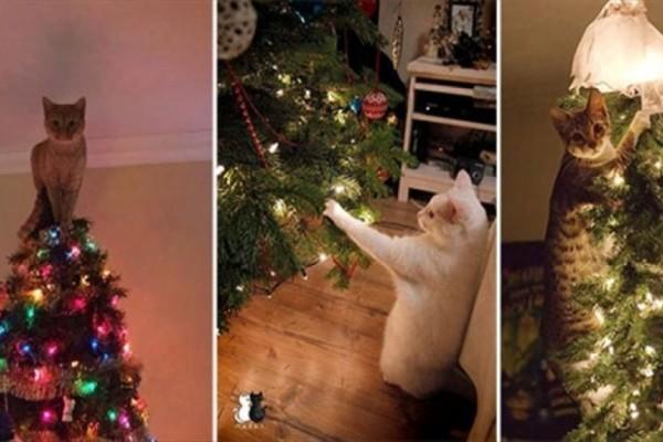 Οι απίστευτες αντιδράσεις από γάτες όταν βλέπουν χριστουγεννιάτικο δέντρο!