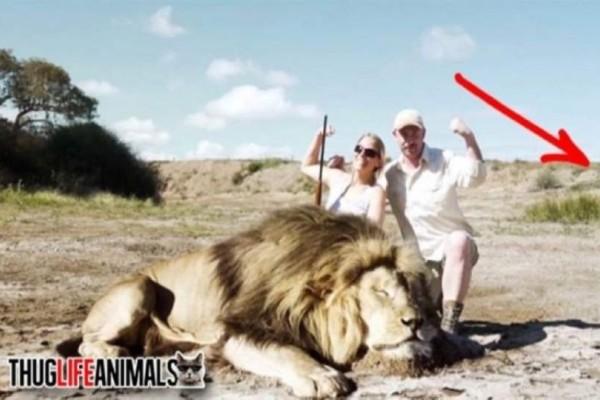Σοκ: Κυνηγοί σκότωσαν ένα λιοντάρι -  Όταν πήγαν να το βγάλουν φωτογραφία, Δεν είχαν ιδέα τι τους περίμενε…