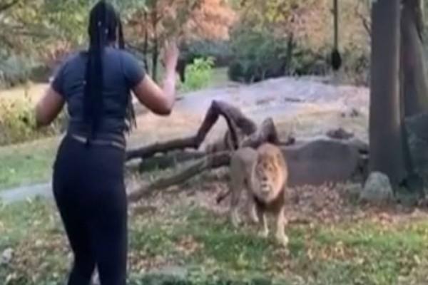 Γυναίκα μπούκαρε στα λιοντάρια μέσα στο ζωολογικό κήπο για να βγάλει βίντεο! Λίγο μετά
