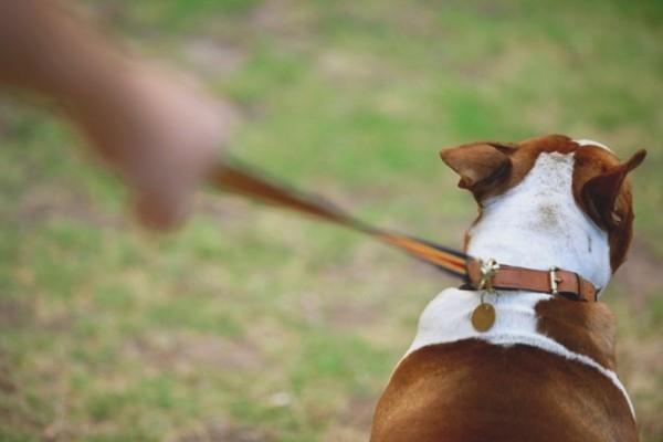 Αχαΐα: Έβγαλε το σκύλο της βόλτα και κατέληξε στην εντατική!