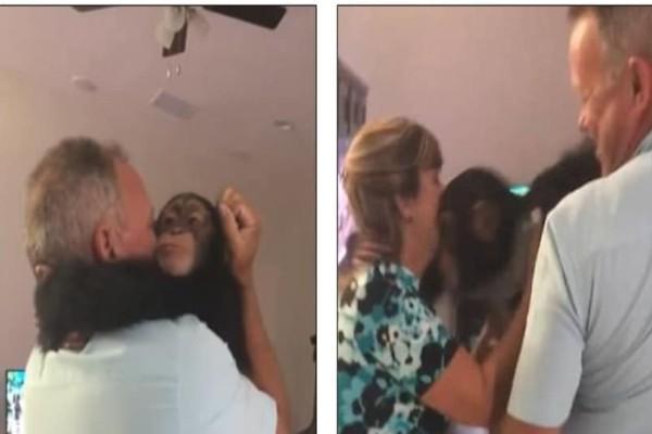 Ένας χιμπατζής συναντά μετά από χρόνια τους ανθρώπους που τον μεγάλωσαν και...κάνει κάτι απίστευτο!