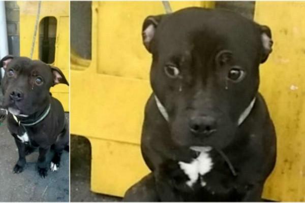 Ο σκύλος αυτός  έχει δάκρυα στα μάτια  - Όταν μάθετε τον λόγο θα λυγίσετε!