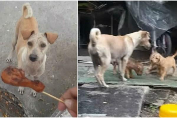 Πήρε φαγητό και το έδωσε σε μια σκυλίτσα. Όμως αυτό που είδε τον έκανε να δακρύσει!