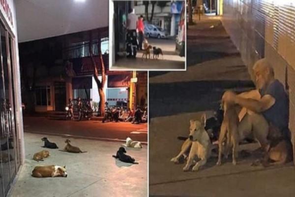 Άστεγος άντρας έπαθε έμφραγμα και οι 6 σκύλοι του περίμεναν έξω από το νοσοκομείο μέχρι να γίνει καλά